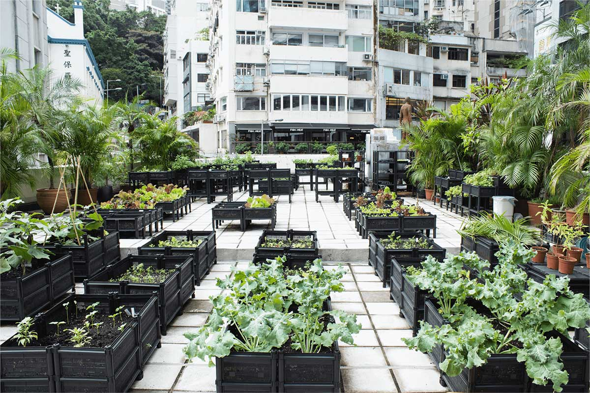Urban Gardening Strategies