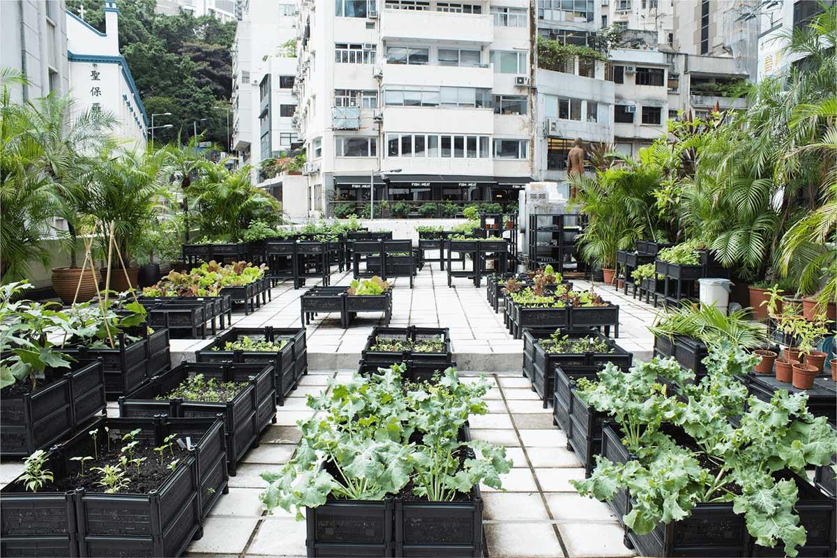 Urban Gardening Strategies