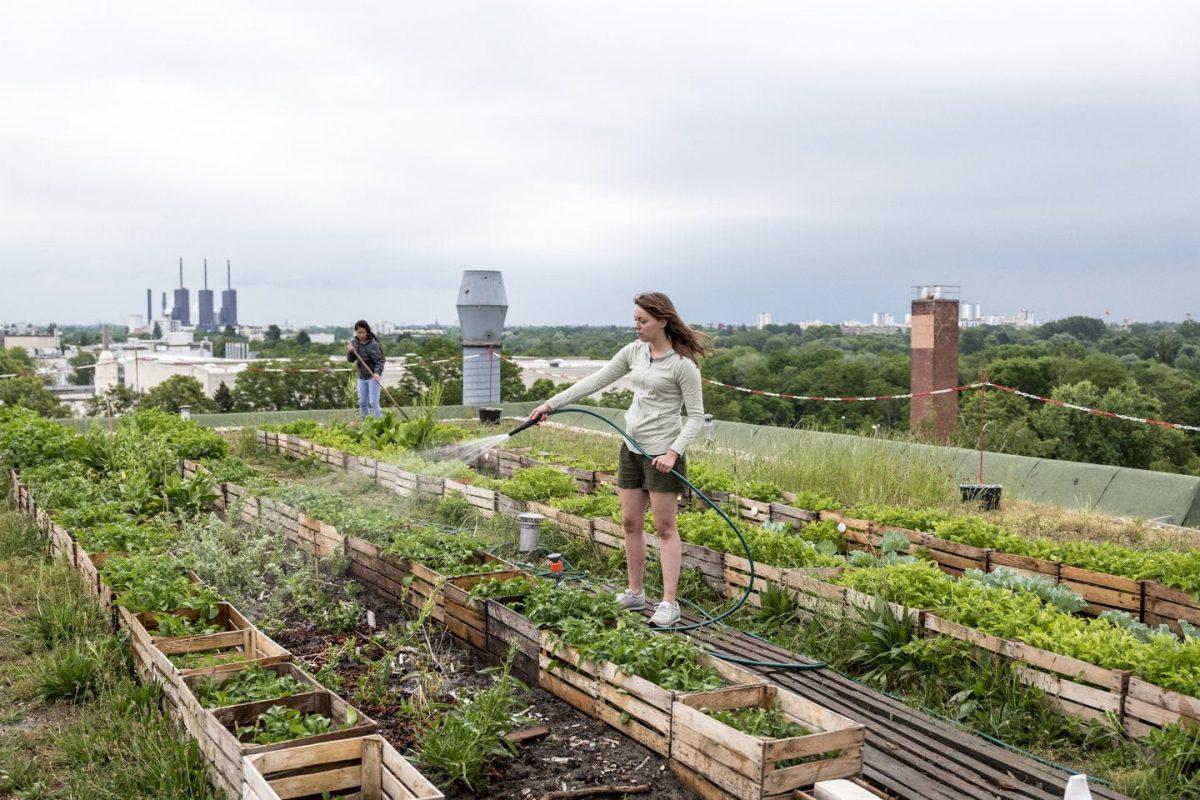 Reasons Why Urban Gardening Is A Good Idea