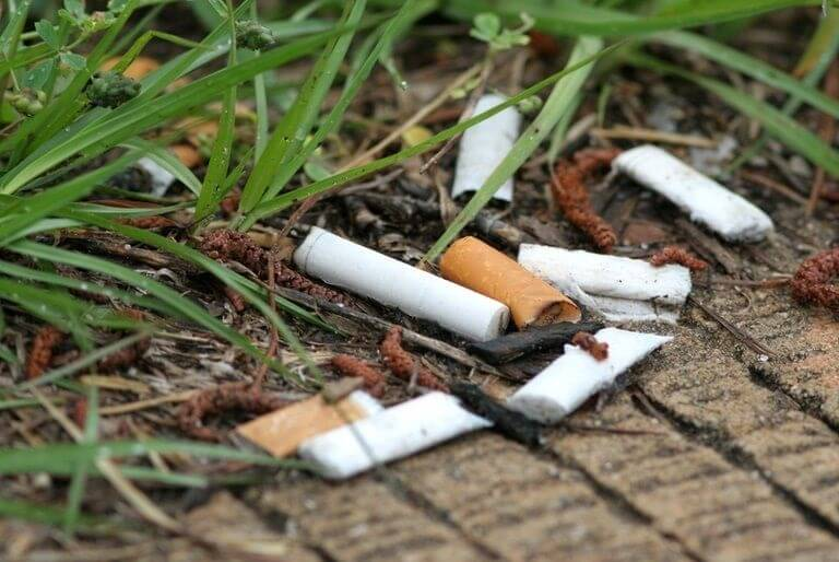 How Does Cigarette Smoke Affect Your Plants