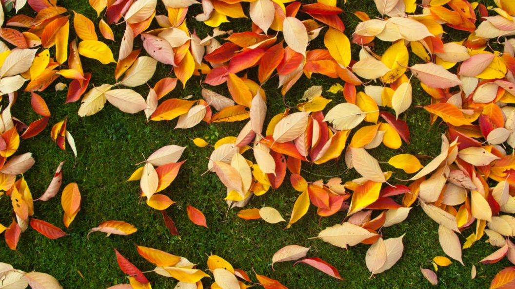 What Does Fall Cleanup Service Include?