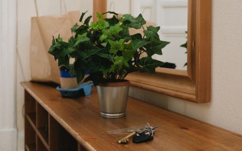 What Plants Are Good for Hallways?